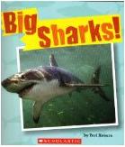 Big Sharks!